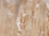 Пример фото на Nikon AF 180 mm F 2.8 (IF) ED