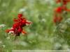 Фото на Nikon 180mm F2.8 ED AIS