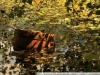 Пример фото на Nikon ED AF-S Nikkor 24-120 мм 3.5-5.6G VR IF