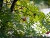 Фото на Nikon 24-70mm f/2.8G ED AF-S N Nikkor