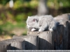 Фото на Nikon AF Nikkor 28-200mm 1:3.5-5.6D