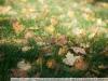 Фото на Nikon AF-D 28-200 mm f 3.5 - 5.6