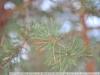 Пример фотографии на Nikon AF-S 28-70 mm f 2.8 D IF-ED