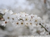 Фотография на Nikon AF 28-80 мм 3.3-5.6 G