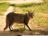 Фото на Nikon AF Nikkor 28-85mm 1:3.5-4.5