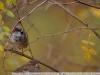 Фото на Nikon AF Nikkor 300mm f2.8 IF-ED