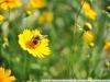 Пример фото на Nikon AF Nikkor 35-105 mm 3.5-4.5 MKII