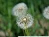Пример фотографии на Nikon AF Nikkor 35-105mm f3.5-4.5