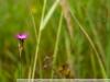 Фотография с Nikon AF Nikkor 35-70 mm f/ 3.3-4.5