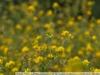Photo from Nikon AF Nikkor 35-70 mm f / 3.3-4.5