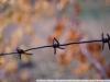 Sample Photos Nikon AF Nikkor 35-70 3.3-4.5