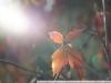 Примеры фотографий Nikon AF Nikkor 35-70 3.3-4.5
