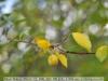 nikon-35mm-f2-ai-s-lens-review-22