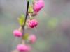 Фото на Nikon 40 mm 2.8 G