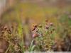 Пример фотографии на Nikon AF Nikkor 50mm 1.8