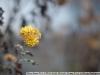 Фото на Nikon 50mm f/1.2 AI-s Nikkor