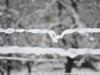 Фото на Nikon 50mm f1.8D AF Nikkor и полный кадр