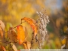 фото с Nikon AF-S Nikkor 50mm 1:1.4G на dx камеру