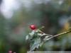 Фото на Nikon 50mm F1.4 N0n-Ai