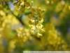 Nikon AF-S Nikkor 50mm 1:1.8G SWM Aspherical пример фото
