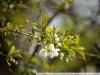 Пример фото на Nikon AF Nikkor 70-300 mm 4-5.6 G