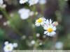 Пример фотографии на Nikon 28-105mm f3.5-4.5 AF-D