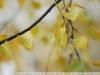 Фото на Nikon 85mm f1.4 D AF