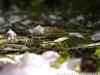 Фото на Nikon D100