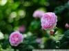 Фото на Nikon D300