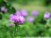 Photo on Nikon D300