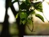 Примеры фотографий на Nikon D3100