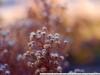 Примеры фотографий на Nikon D40