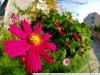 Photo at Nikon DX Fisheye 10.5 2.8 G