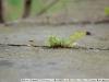 Фото на Nikon 100mm F2.8 Series E