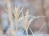nikon-ed-af-nikkor-80-200-mm-mk1-lens-review-20