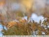 nikon-ed-af-nikkor-80-200-mm-mk1-lens-review-6