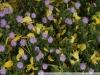 Pentax smc DA 50 mm f 1.8