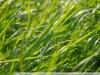 Фото на SMC Pentax-DA 3.5-5.6 18-55mm AL WR