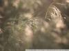 Пример фото на Carl Zeiss Makro Planar 2.8 100 mm T*