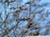 Пример фото на Fujifilm FinePix S1 Pro