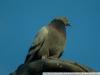 Пример фото на Fujifilm FinePix S2 Pro