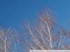 Пример фото на Fujifilm FinePix S3 Pro
