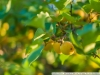 Фото Fujifilm FinePix S5 Pro