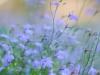 Пример фотографии на  Fujifilm FinePix S5 Pro