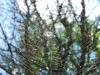 Фото на Sigma 24-70 2.8 EX DG HSM