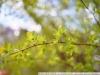 Примеры фотографий SIGMA MINI-WIDE II 2.8 28 mm