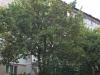 sigma-28-70-ex-image-33