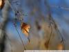 Sample photos on Sigma Zoom 28-70mm 2.8