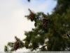 pentax-smc-70-210-f4-lens-samples-13