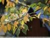 pentax-smc-70-210-f4-lens-samples-8